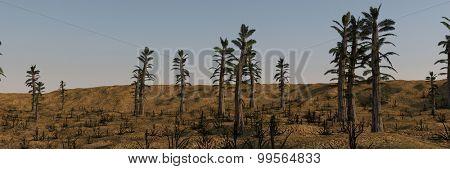 tempskya grove