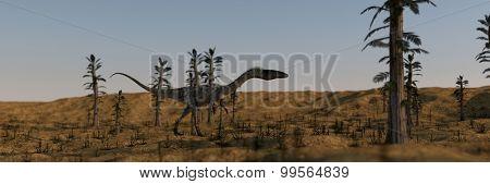coelophysis in tempskya grove