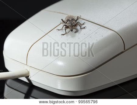 Bug On Mouse Button
