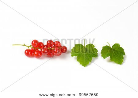 piece of red currant with two green leaves
