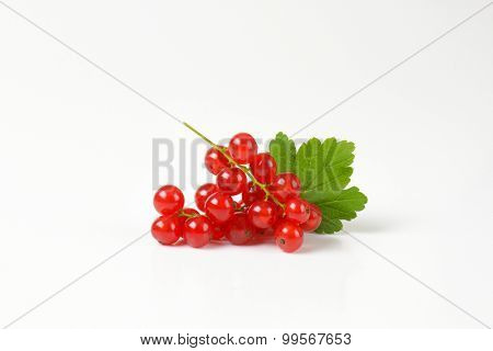 fresh red currant with leaf