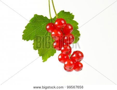 piece of fresh red currant with leaf