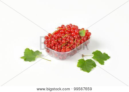 freshly picked red currant in the plastic box