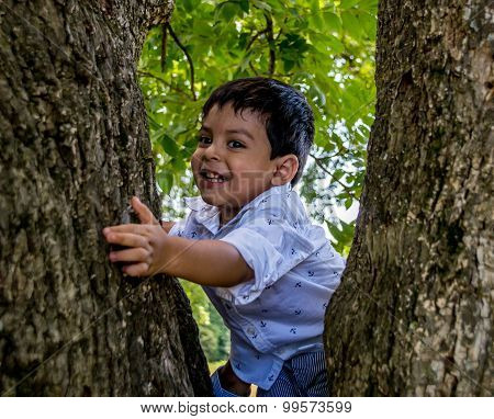 Latino Child In A Tree