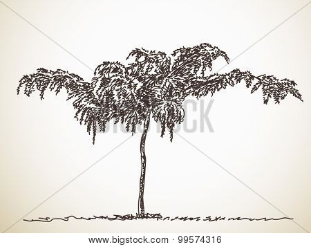 Sketch of Isolated tree, Hand drawn Vector illustration