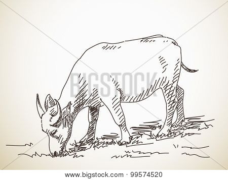 Buffalo, Hand drawn illustration, Vector sketch