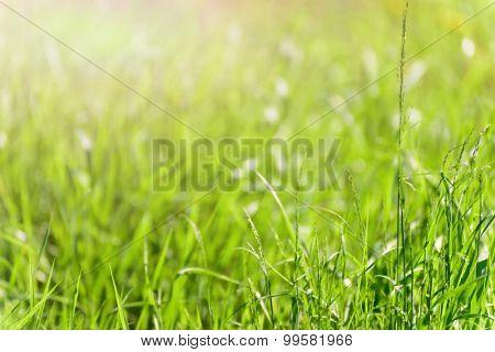 soft blur green grass background