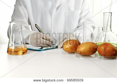 Scientist examines potatoes in laboratory