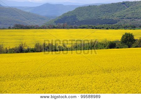 Fields Of Rape And Green Hills In Bulgaria