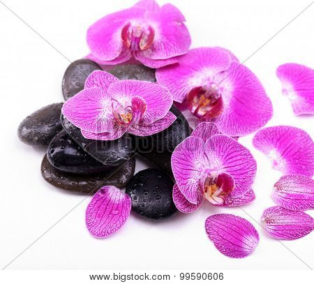 Violet orchid and zen stones isolated on white