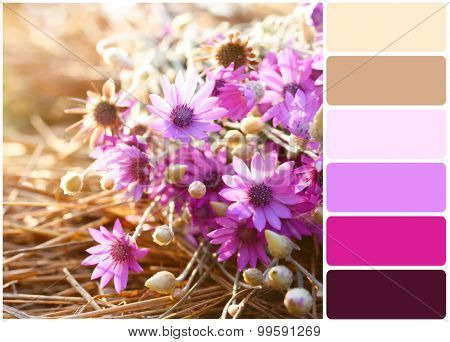 Beautiful wild flowers on straw  and palette of colors