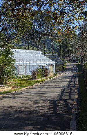 Greenhouse Plantations