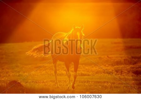 Abstract Camera Effect Of A Horse On A Farmland