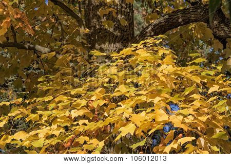 Tree Is Decorated With Yellow Colored Leaves
