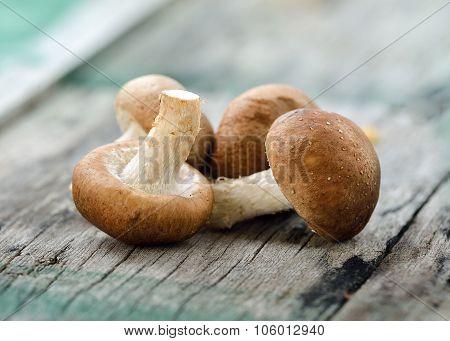 Shiitake Mushroom On The Old Wood