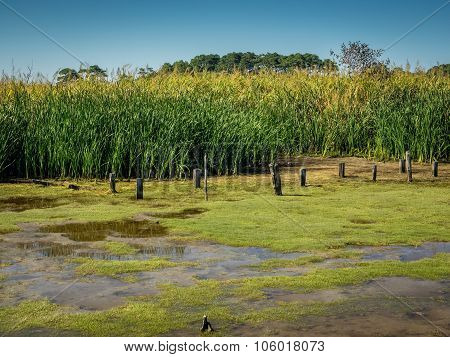 Marsh and Tall Grass