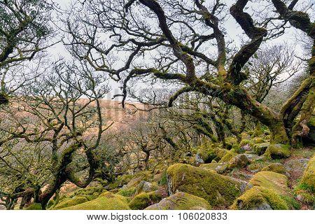 Gnarled Oak Forest