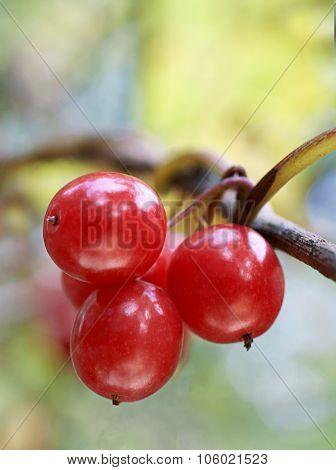 Wild Berries.