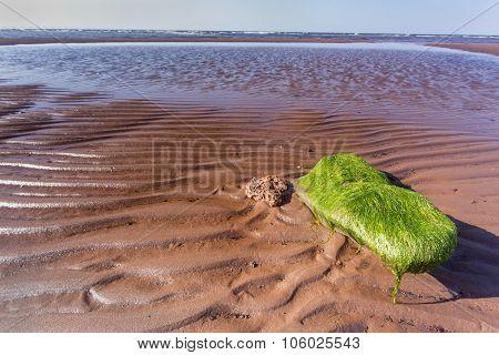 seaweed on rock; Prince Edward Island