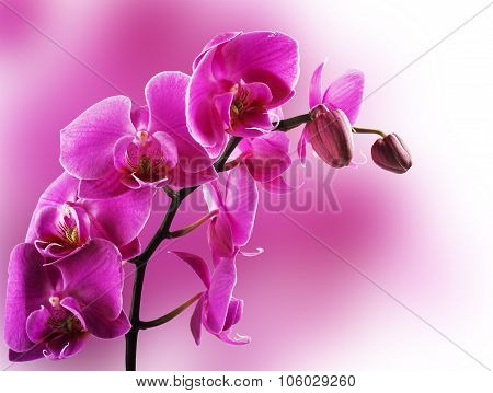 Orchid flowers border