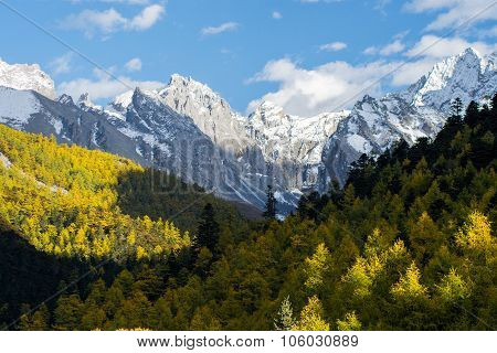 Mountain With Snow And Pine Forest In Autumn, Taken In The Evening, Yading, Sichuan, China