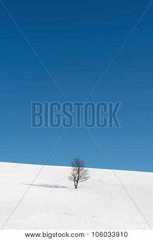 Tree Standing Amid Snowy Plains