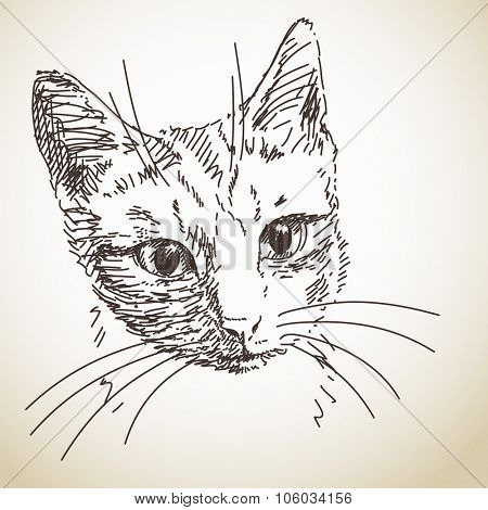 Sketch of cat head, Hand drawn illustration