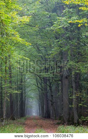 Straight Ground Road Leading Across Forest