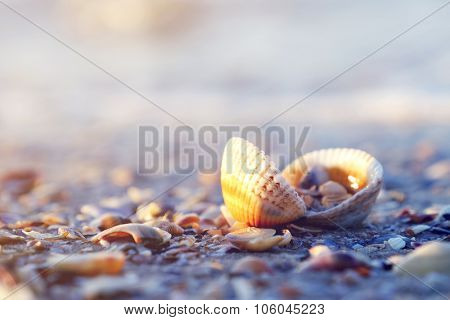 Little seashells in the morning on blurred beach background, close up