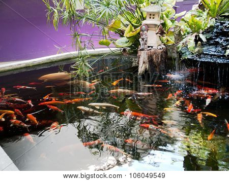 Koi Pond, In The Garden