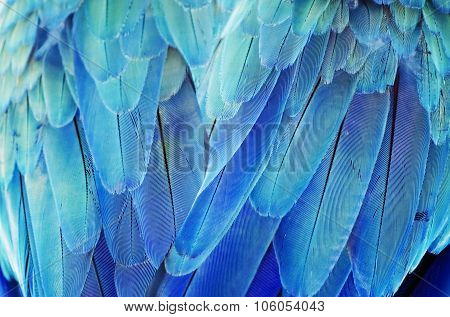 Turquoise Feather Background