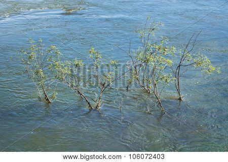 Plants At Parana River In Iguazu Park