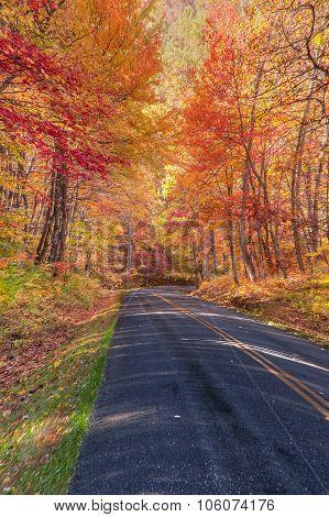 Autumn Along The Skyline Drive