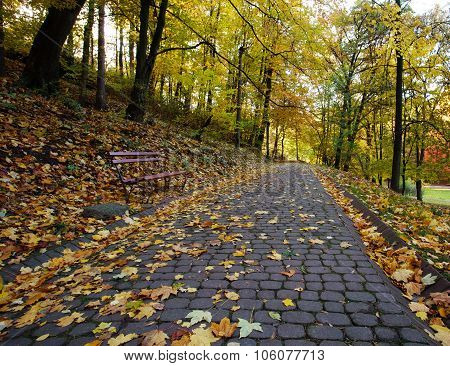 Footpath In The Autumn City Park Strewn With Yellow Fallen Leaves