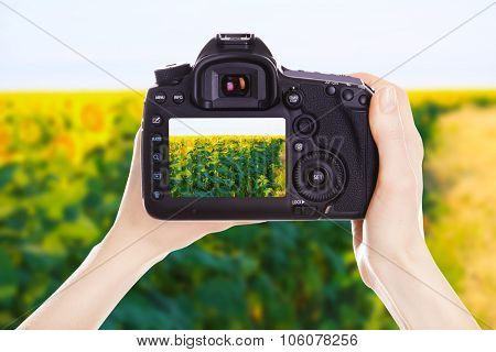 Photographer with camera at work