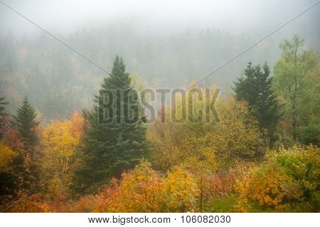 Fir Tree In Fog