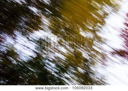 Racing Past Trees