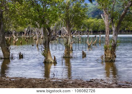 Liquica Lake And Marshland, East Timor