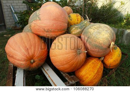 Big Autumn Harvest From The Farmer, The Preparations For Halloween. Dietary Vegetarian Food. The Big