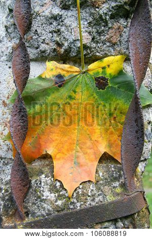 Bright Autumn Leaf With Eyes On The Gray Concrete With Iron Bars