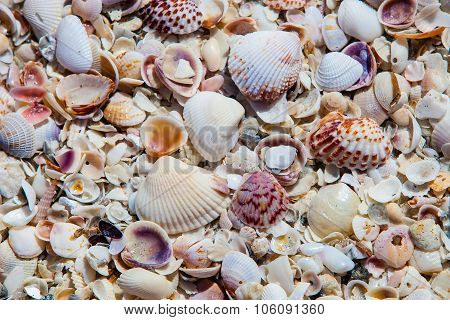 Sea Shells Along The Beach Background