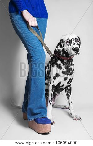 Dog Breed Dalmatian And Girl