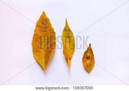 Fall Leaf Family