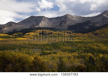 Autumn Foilage Near Crested Butte Colorado On Kebler Pass Rd.