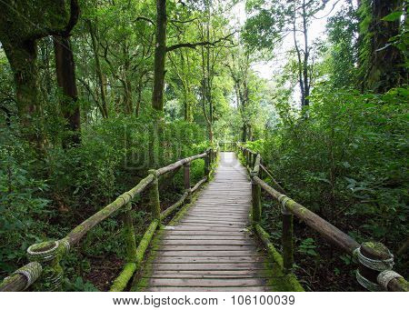 Wood Of Pavement In Green Jungle