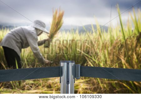 Barricade With Place Is Off Limits To Farmers Harvesting Rice In Rice Field (do Not Entry) As Blur B