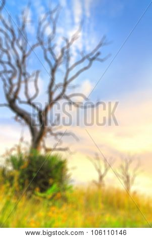 Blur Background Amd Meadow In Vertical Frame