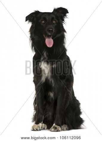 Crossbreed sitting in front of white background