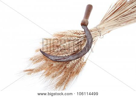 bunch of mown wheat ears with vintage handmade reaper hook sickle isolated on white background