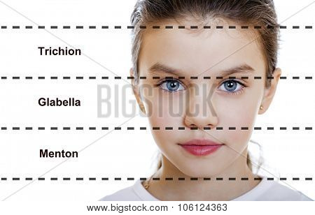 The ideal beauty. Symmetric of the female face of a little girl, isolated on white background. Translation of inscriptions from top to bottom: upper third, middle third lower third